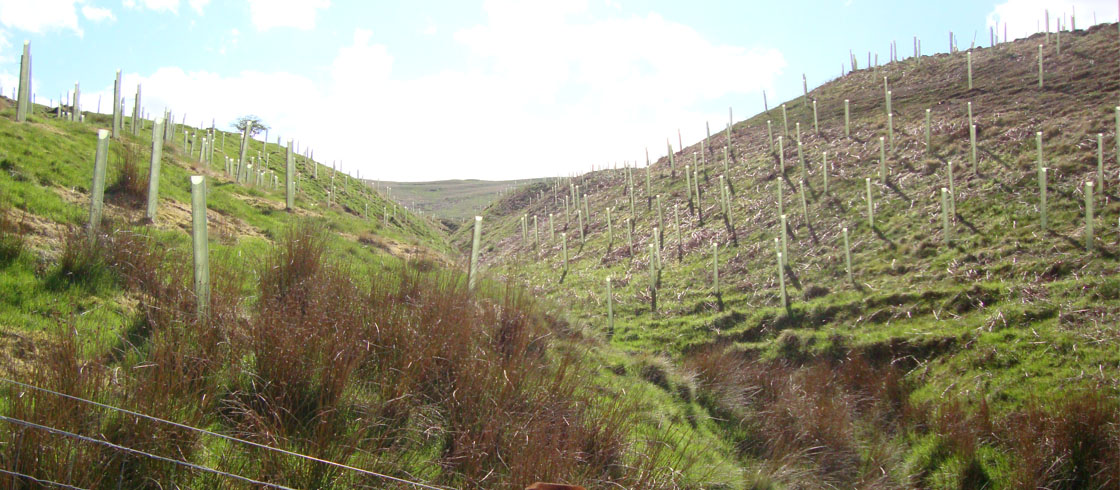 Building Commitment to Forest Creation in the UK