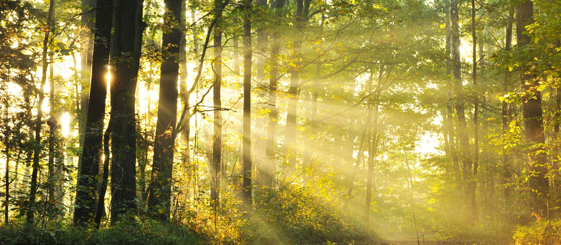 What does Natural Capital mean for Business?