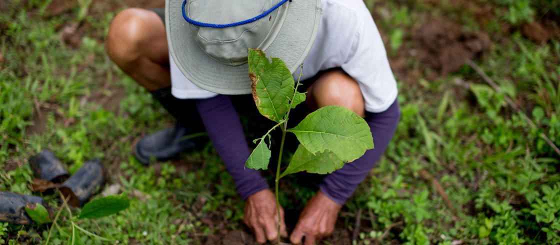 Natural Capital comes of age with the launch of a tool to help business