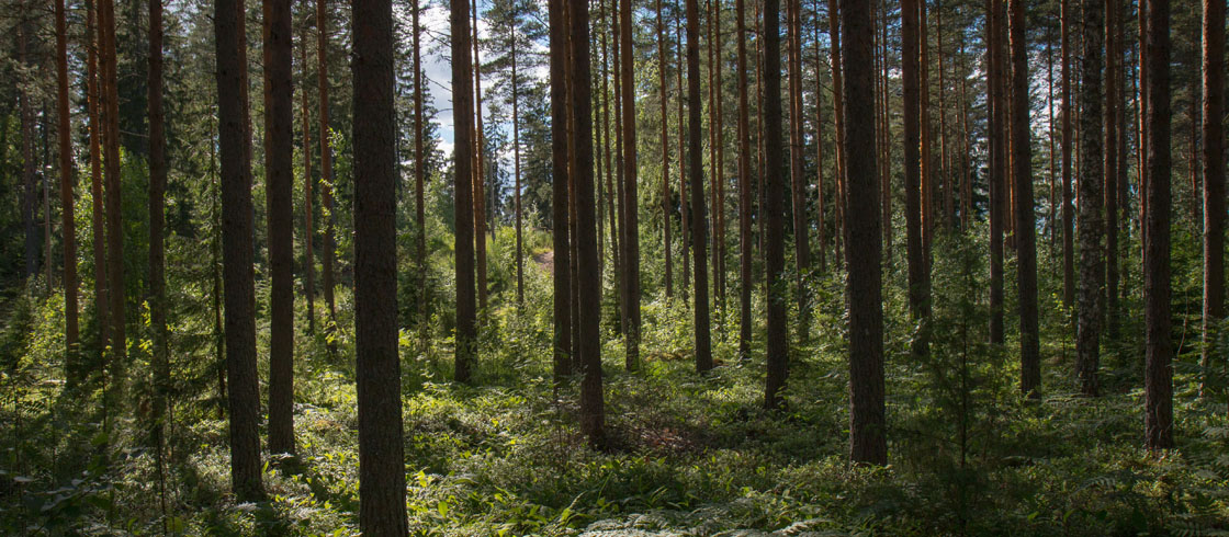 Magic Machines: Why Companies are Backing Europe's Forests