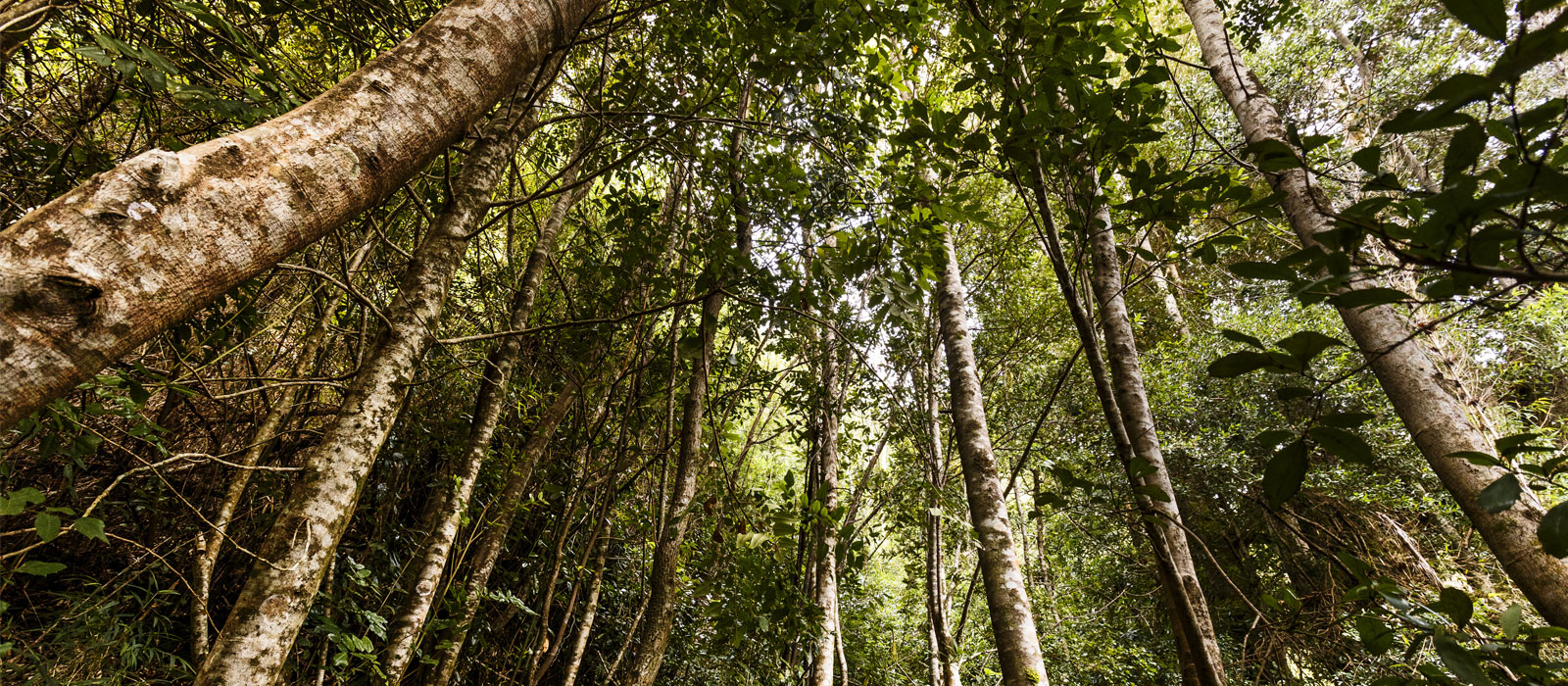 The Strengthening Synergies Between Climate Finance, Carbon Pricing and Natural Capital