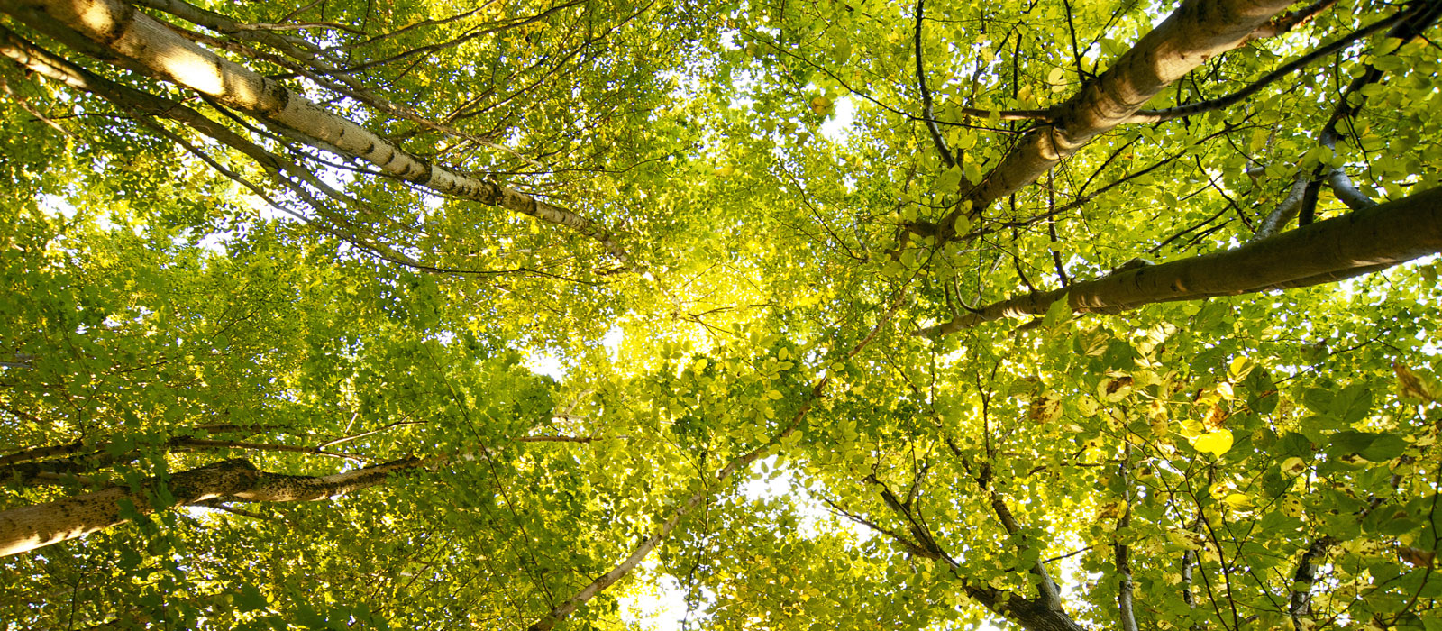 How Can Business Meet Commitments to Zero-Deforestation?