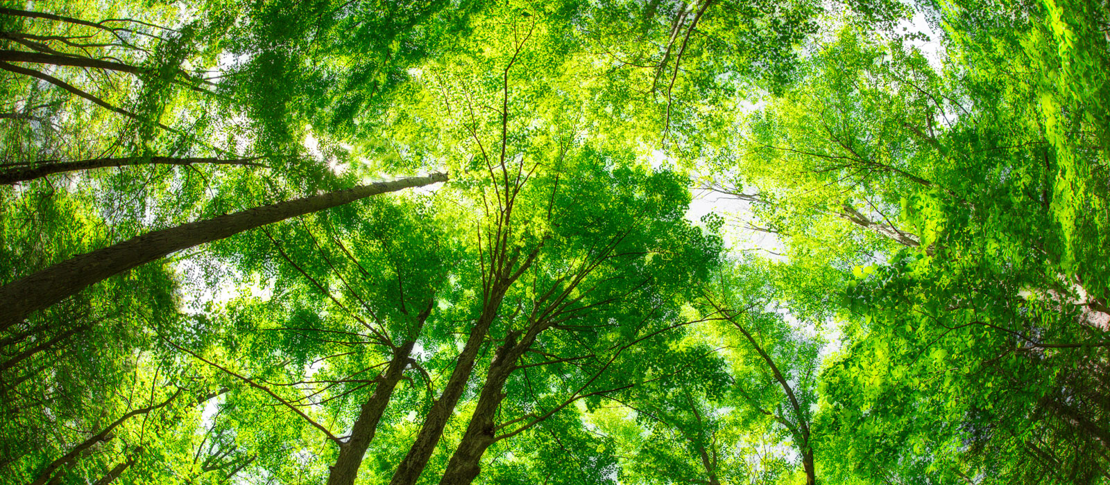 How Business is Taking Action to Reforest Europe
